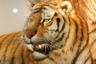chinese embroidery tiger